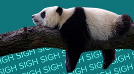 Panda lying on a tree branch with words sign in the background